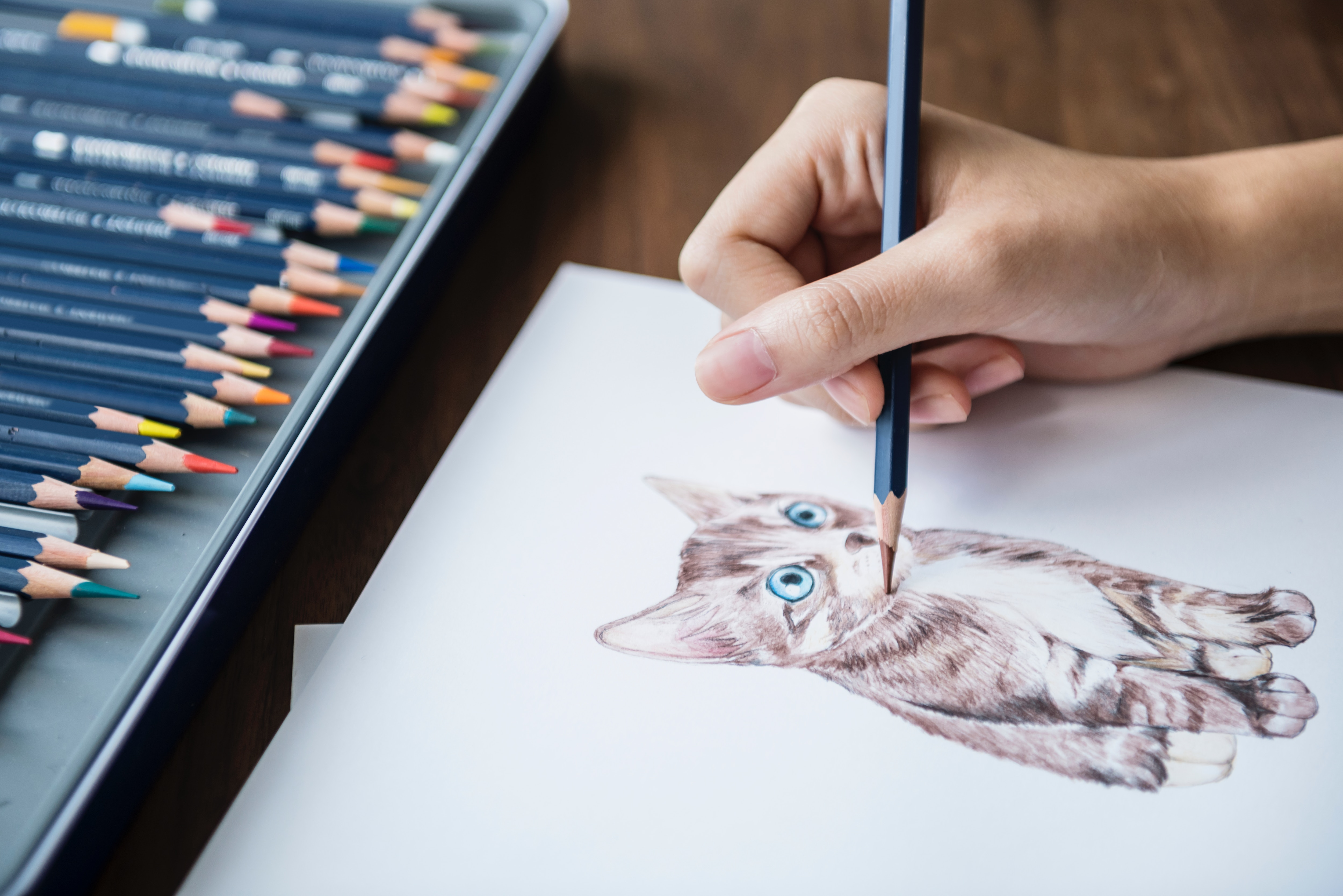 art; journal; draw; cat