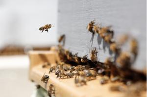 Bee hive workshop